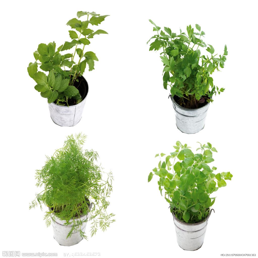 首頁 裝修圖片 盆栽圖片-最新盆栽圖片大全   室內盆栽圖片專題,室內