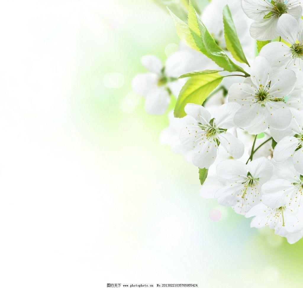 装修图片 纯白贴图片-最新纯白贴图片大全   纯白渐变底图素材 纯白底