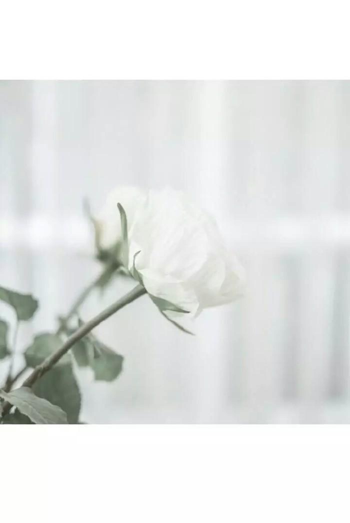 樱桃小丸子可爱壁纸纯白