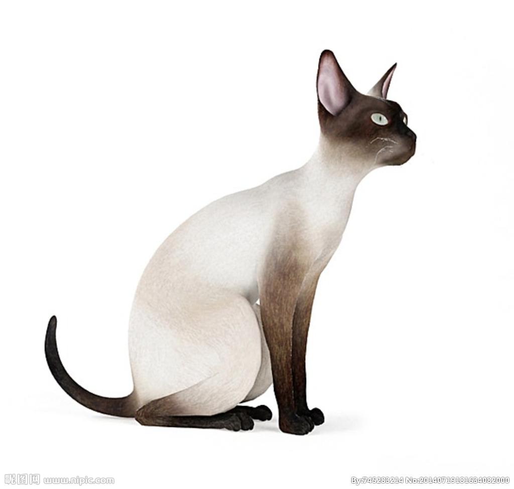 猫图设计图片-最新猫图设计图片大全